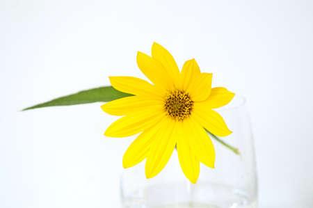 Yellow topinambur flower