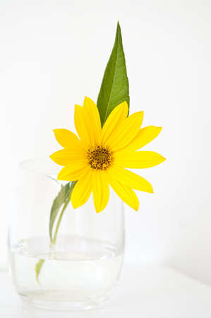 Yellow topinambur flower in a glass