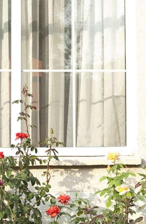 Window to the rose garden