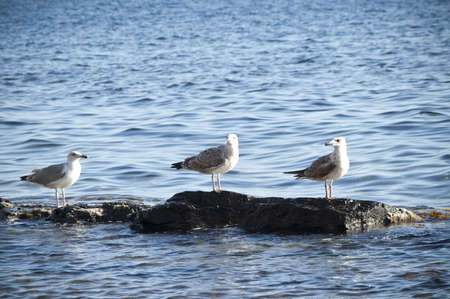 Three seagulls on the rocks