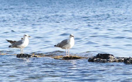 Seagulls on the rock