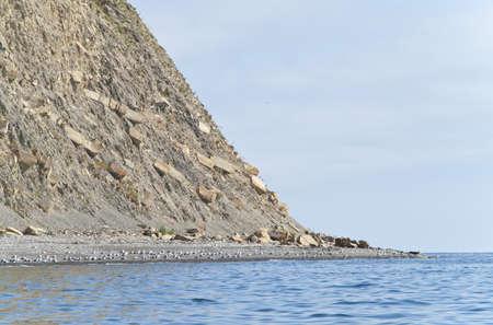 Seagull flock on the beach Stock Photo