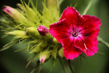 Red gilly flower with beautiful bokeh green background Stock Photo