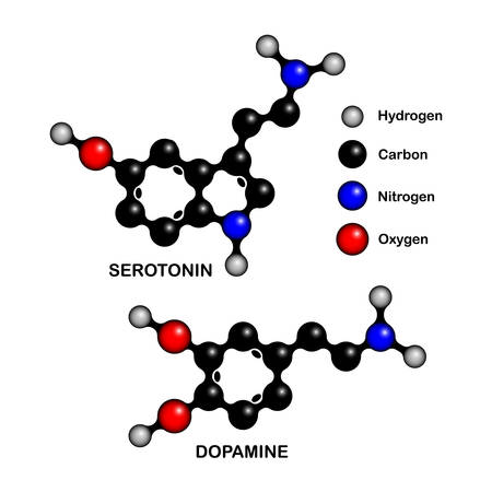 Structural formulas of so-called happiness hormones molecules dopamine and serotonin. Vector illustration of serotonin and dopamine chemical ball-and-stick models isolated on white.