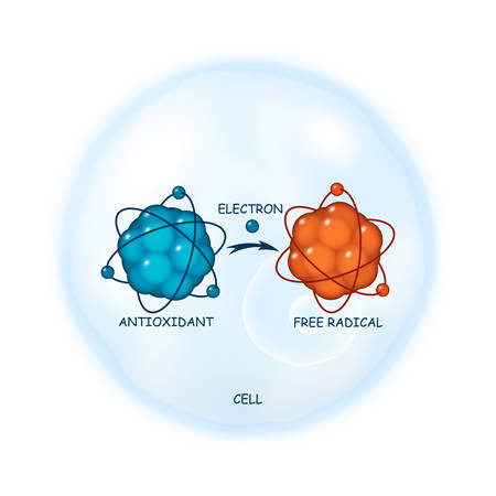 Antioxidant working principle abstract illustration Vectores