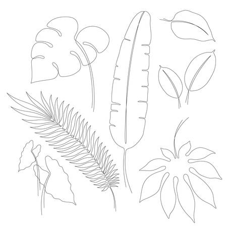 Continuous line drawings of various tropical leaves, single line vector leaves of Monstera, Aralia, Ficus, Aglaonema, Caladium, banana and palm, contour line art design elements or illustrations Illustration
