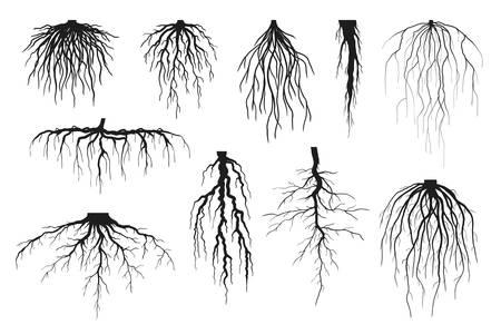 Siluetas de raíces de árboles aisladas en blanco, conjunto de vectores de raíces pivotantes y sistemas de raíces fibrosas de varias plantas, ilustraciones de raíces negras realistas