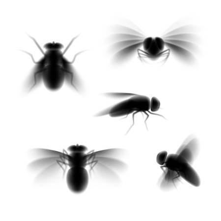 Blurred fly silhouette isolated on white, black fly in flight and sitting still from various angles of view, a set of unfocused vector illustrations of pest insect Stockfoto - 147090030