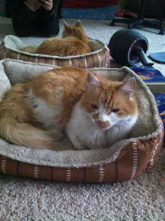 My kitty doesnt usually go in her bed so when she did I had to take the picture  Foto de archivo