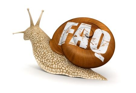 Snail and FAQ    photo