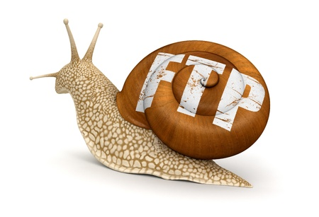 Snail and FTP   photo