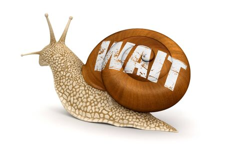 no rush: Wait Snail  Stock Photo