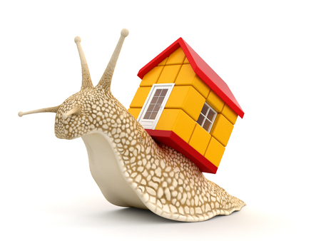 no rush: Snail with house