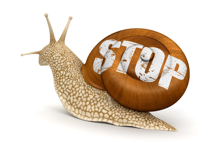 no rush: Stop Snail