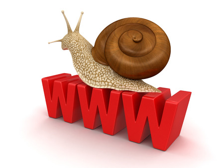 Snail and WWW   photo