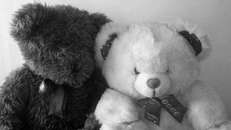 osos de peluche: Dos osos de peluche