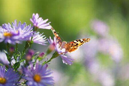 Orange butterfly perching on a flower