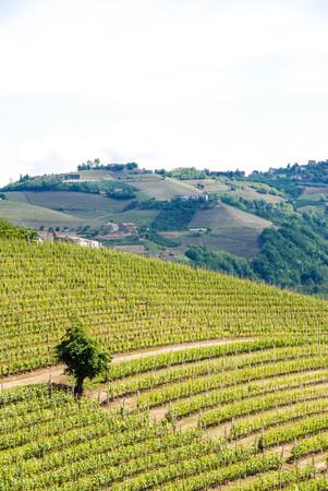 View of Langhe hills near Alba