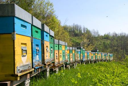 Ruches pour l'apiculture Banque d'images - 78976911