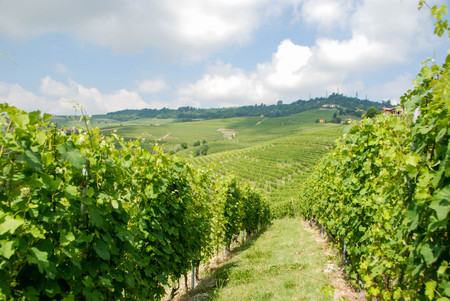 View of Langhe hills with vineyards near La Morra, Piedmont - Italy