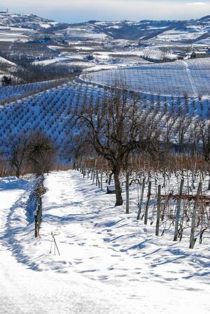 View of Langhe hills near Serralunga dAlba, Piedmont - Italy