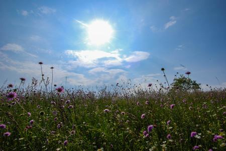 Ciel et soleil vu d'une prairie fleurie Banque d'images - 84619468