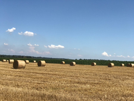 Country landscape with hay bales Stock Photo