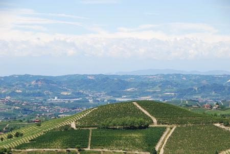 Vineyard of Langhe, Piedmont - Italy