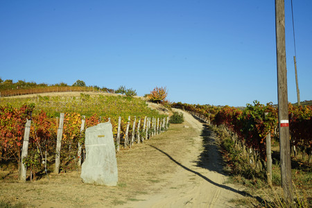 Hiking trails in the hills of Langhe, Piedmont - Italy