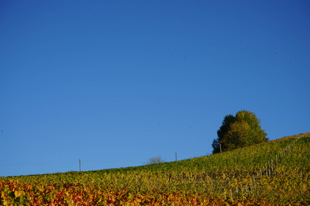 Hills o the Langhe, Piedmont - Italy