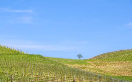 Langhe hills, Serralunga dAlba, Piedmont - Italy Stock Photo