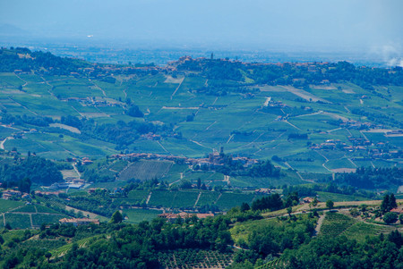 Vineyard, trees and vineyards of Langhe, Piedmont - Italy