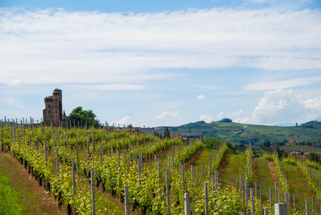 View of Langhe hills with Castle, Piedmont - Italy