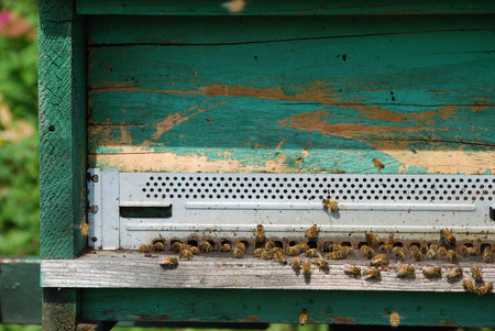 Bees with their beehive, honey producers