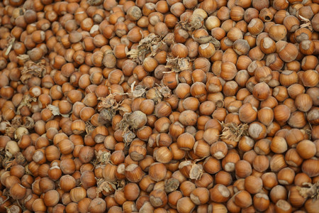 Hazelnuts just picked up in Cortemilia, Piedmont - Italy