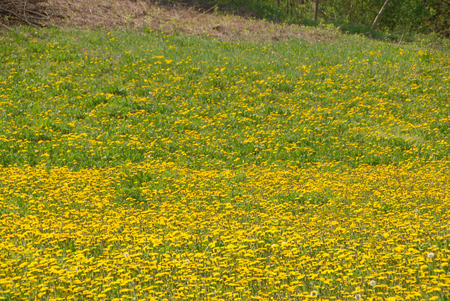 Flowers in a field on the hills of the Langhe Banco de Imagens