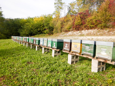 A file of beehives in a meadow in the Langhe, Piedmont - Italy Banco de Imagens