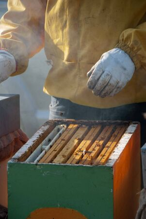 A beekeeper controls the honeys with bees
