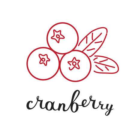 cranberry illustration: Vector illustration of cranberry in inking and hand writing lettering name in English on white isolated background Illustration