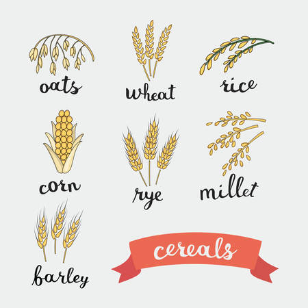 grains: Vector illustration of ripe ears of cereals with inking and lettering names in English