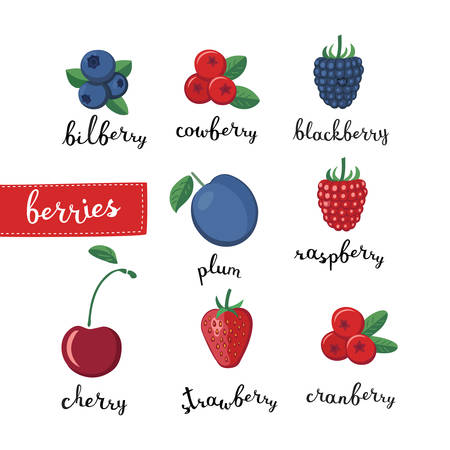 bilberry: Vector color set illustration of different kinds of berries  and lettering name in English on white isolated background