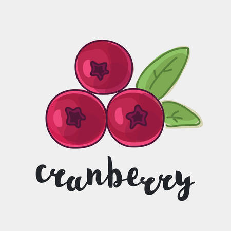 cranberry illustration: color illustration of cranberry with inking and lettering name in English on white isolated background