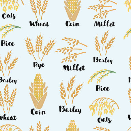 Vector cartoon seamless pattern illustration ears of wheat, rye, barely, corn, rise and names Ilustração
