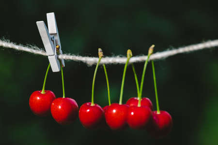 Cherries on the string in the garden on a sunny day Banco de Imagens