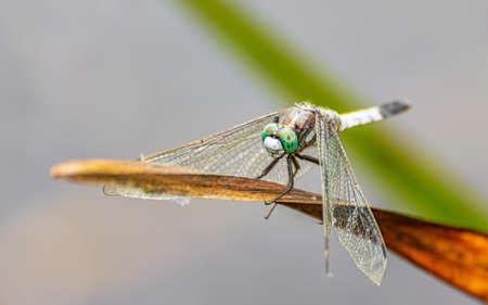 Brilliant Green Dragonfly Found in Deep Jungle.