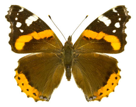 The Red Admiral (Vanessa atalanta) isolated on a white background Stock Photo
