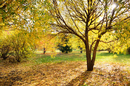 Golden autumn scenery with willows, horizontal background Reklamní fotografie