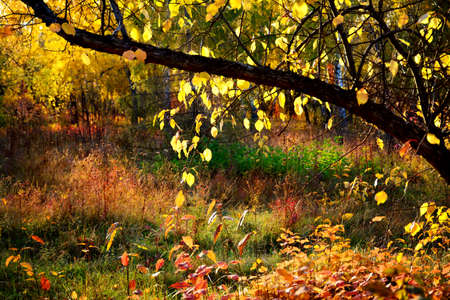 Bright golden autumn scenery, horizontal background