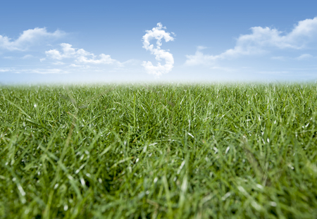 unsettled: Green grass and Dollar currency shaped clouds Stock Photo