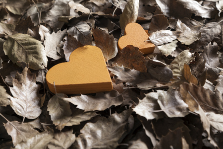 sadly: Seasonal sadly and romantic autumn leaves background
